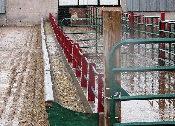 Pin By Cory Scott On Farm Stuff Goat Barn Goat Feeder