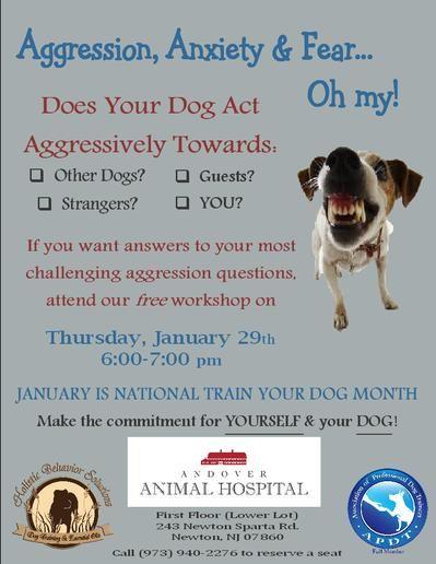 Pin On Dog Training Behavior