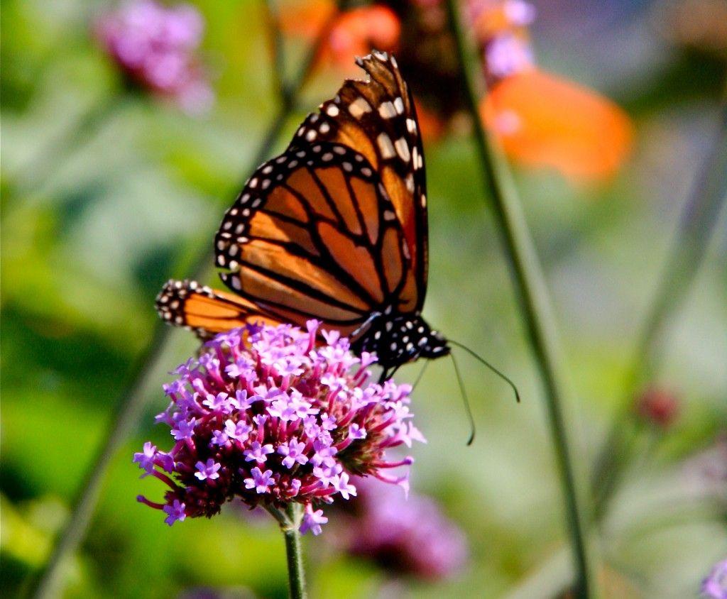 Butterfly And Hummingbird Garden Home Improvement Pinterest Hummingbird Butterfly And Gardens