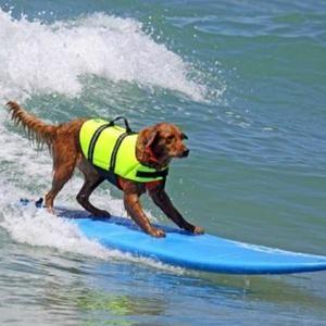surf datând)