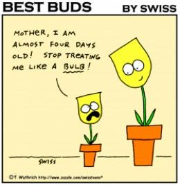 What S The Name Of The Keukenhof Area Verita S Visit Gardening Humor Bulb Flowers Garden Gifts