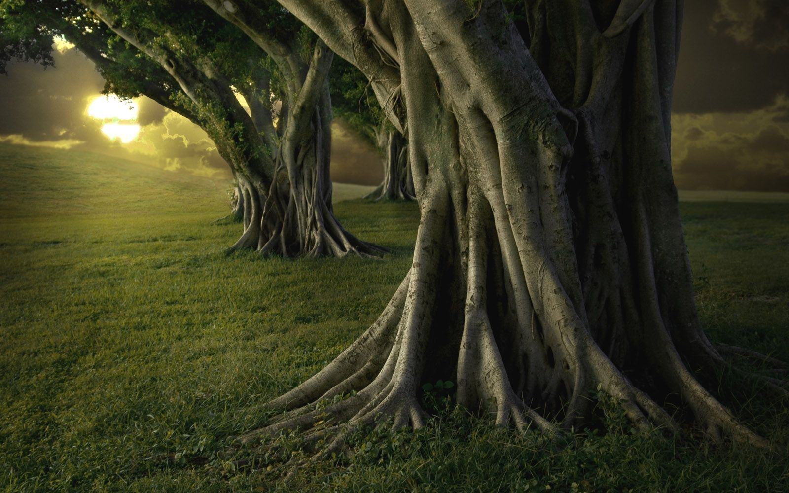 Giant Trees Old Trees Tree Wallpaper Nature Tree