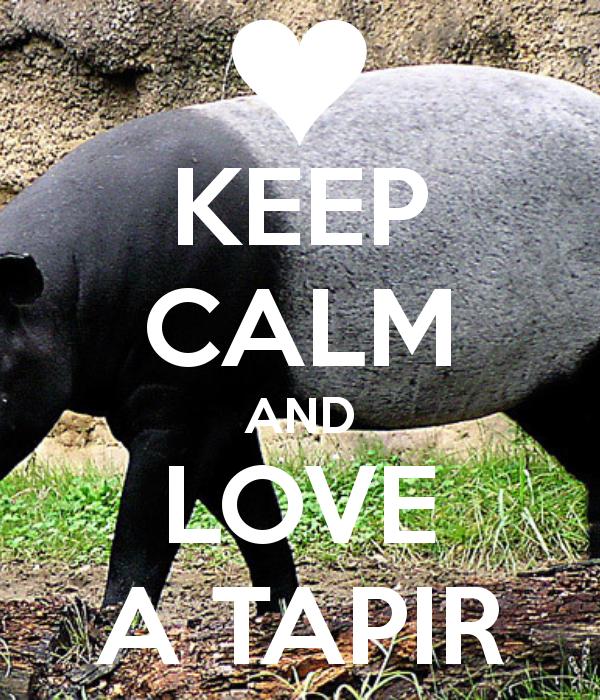tapirs again