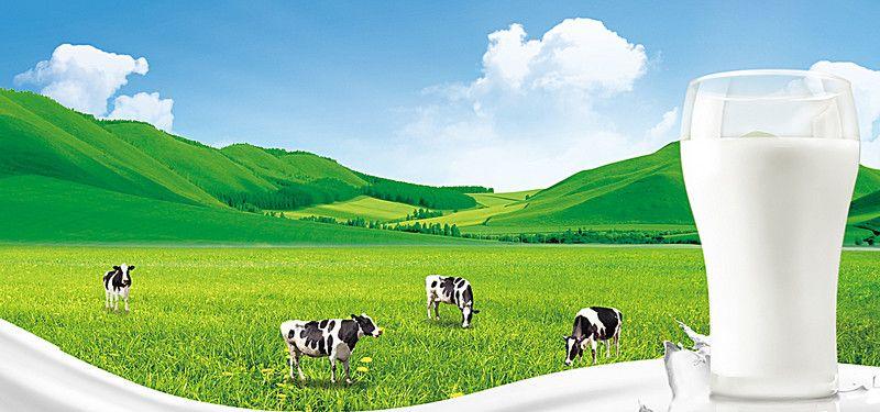 cow grass background ddd