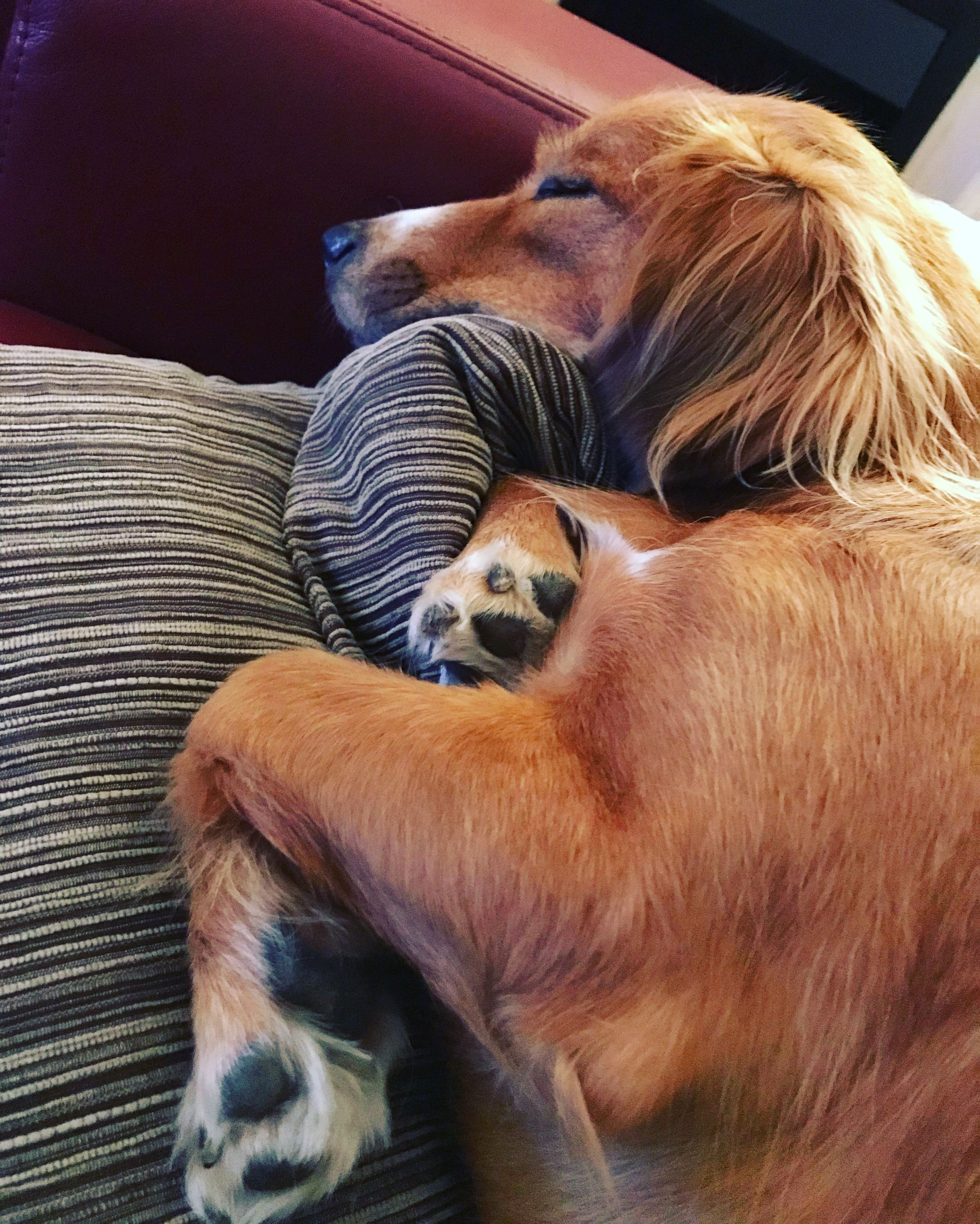 Pin On Dogs