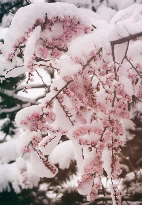 25 Best Outdoor Winter Plants Flowersandflowerthings Flower Aesthetic Winter Flowers Outdoor Winter Plants