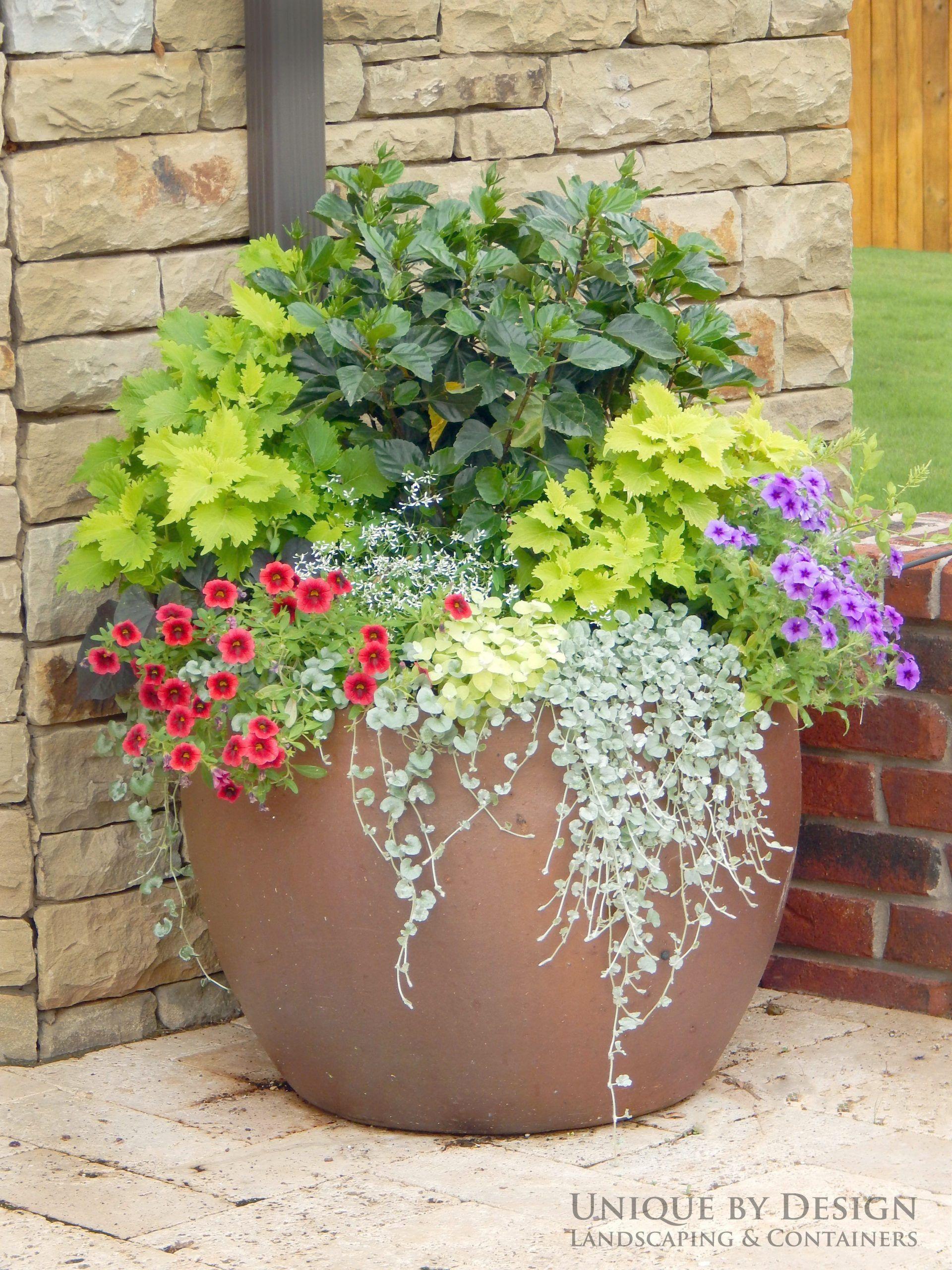 Gardening For Beginners In Missouri Gardening Gifts Elderly Its