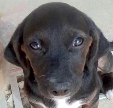 Mix Welpen Ranger Susser Fratz Tiere Suchen Ein Zuhause Susse Tiere Hunde