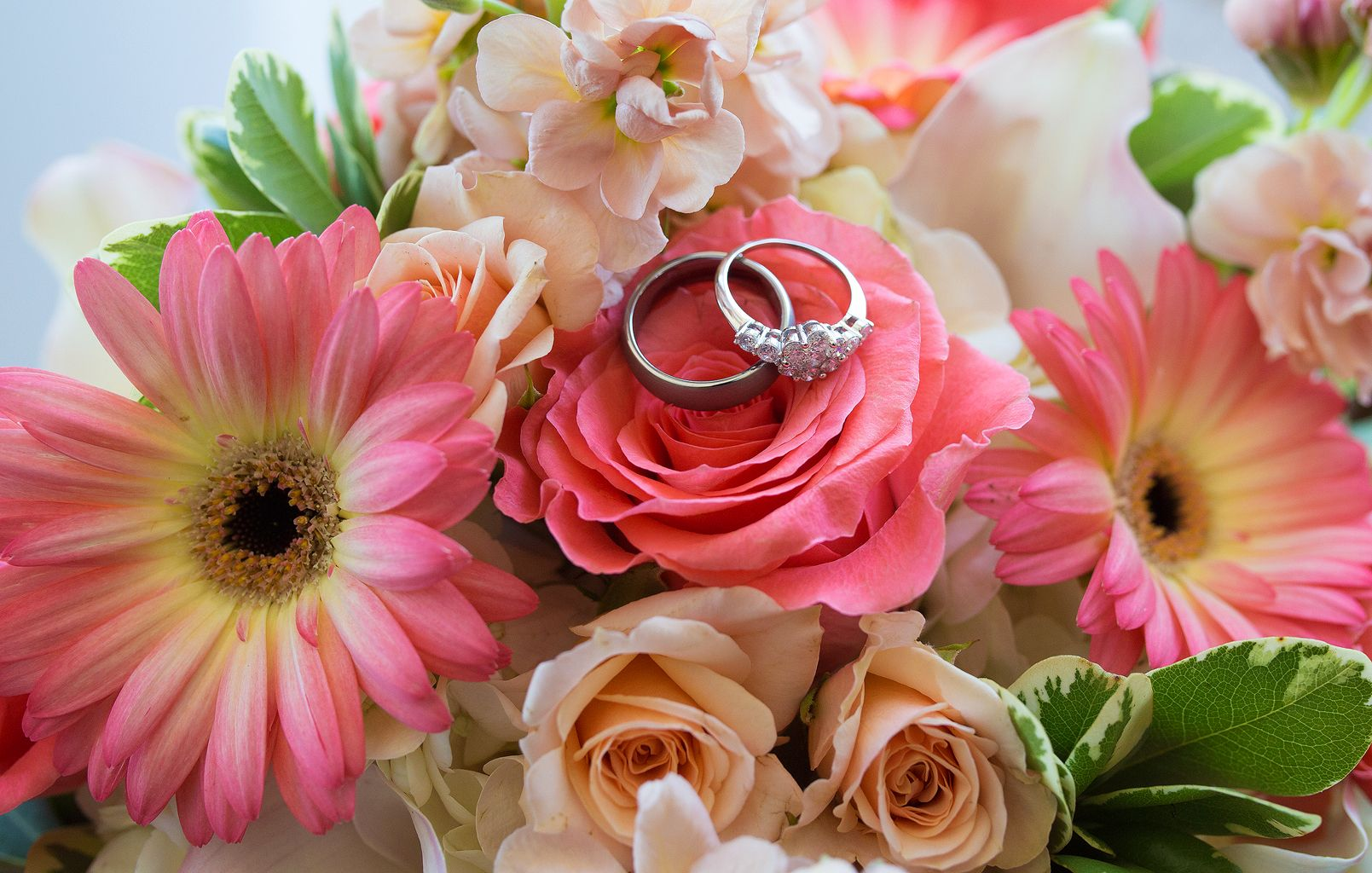 Wedding rings situated on pink gerbera daisies, peach roses, and ...