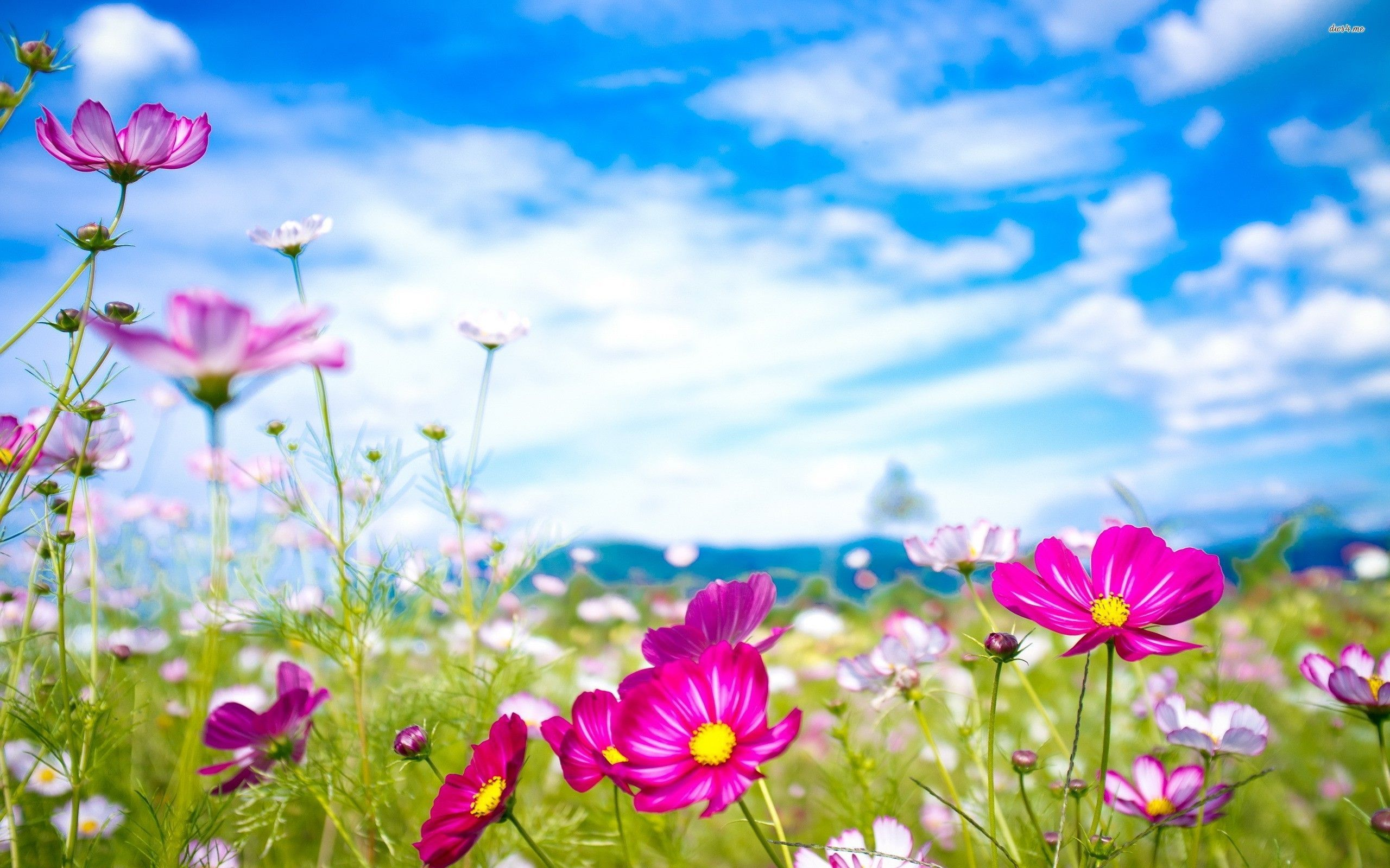 Natural Flower Wallpaper Hd Beautiful In 2020 Flower Desktop Wallpaper Flower Images Wallpapers Flower Wallpaper