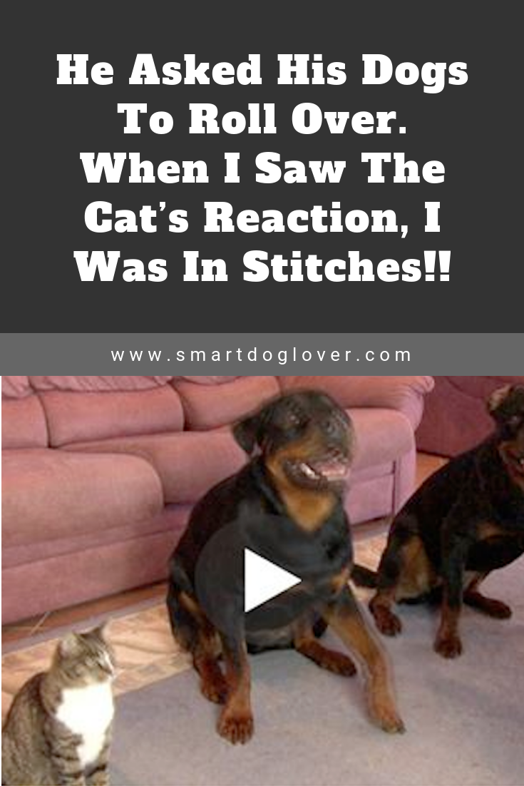 Photo of He Asked His Dogs To Roll Over. When I Saw The Cat's Reaction, I Was In Stitches!!