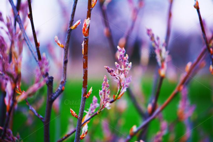 Colourful Budding Branches by dg. seaton on @creativemarket