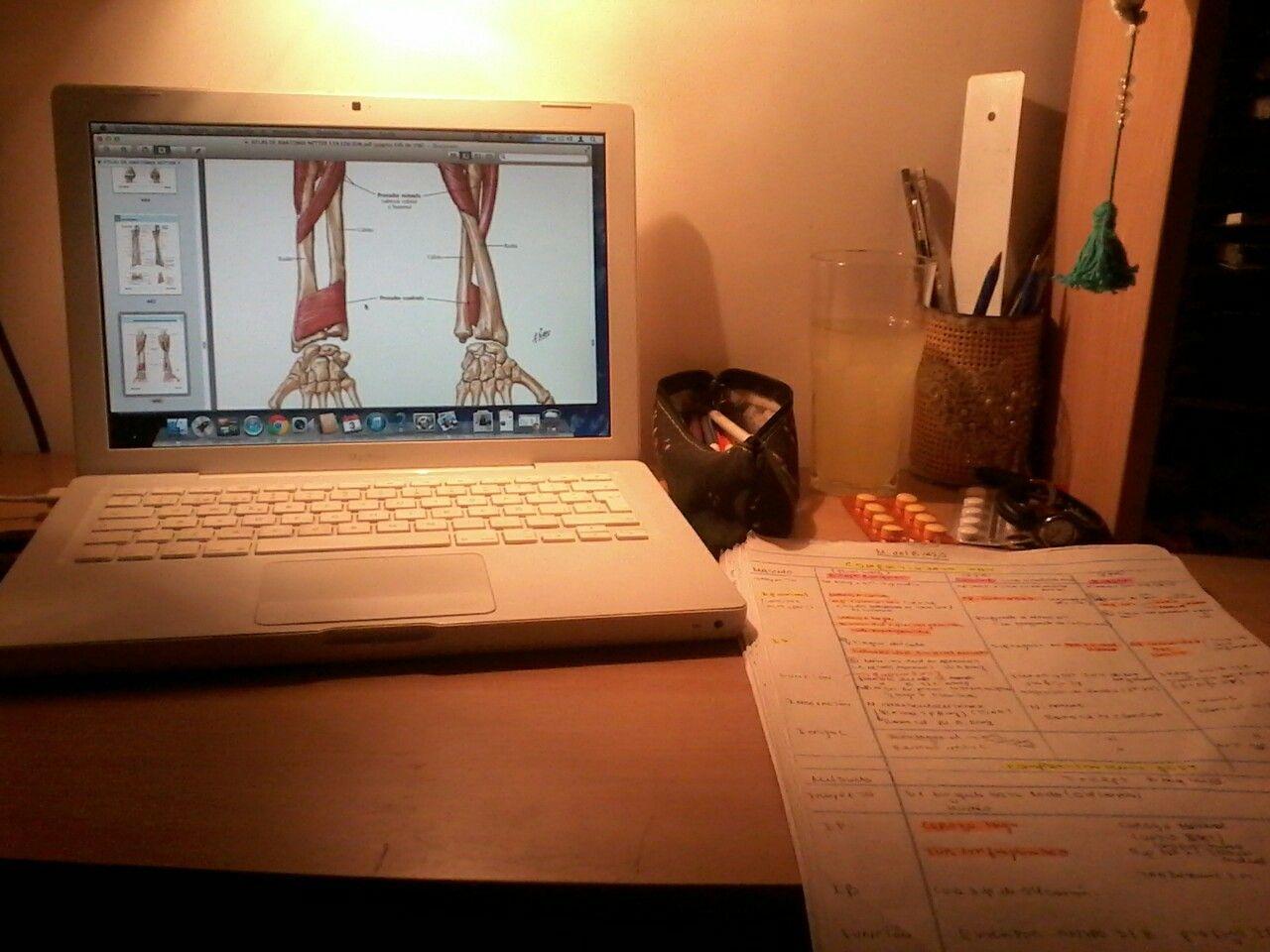 Estudiando Antebrazo... esto no termina más...