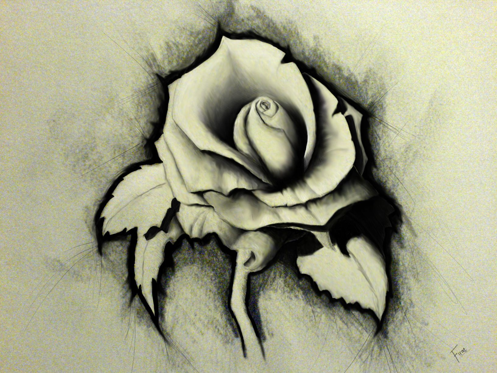 Rose pencil drawing hd wallpaper 2127 wallpaper freewallpic