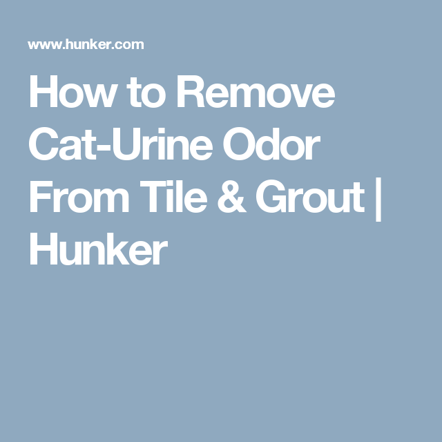 Remove Cat Urine Odor From Tile Grout