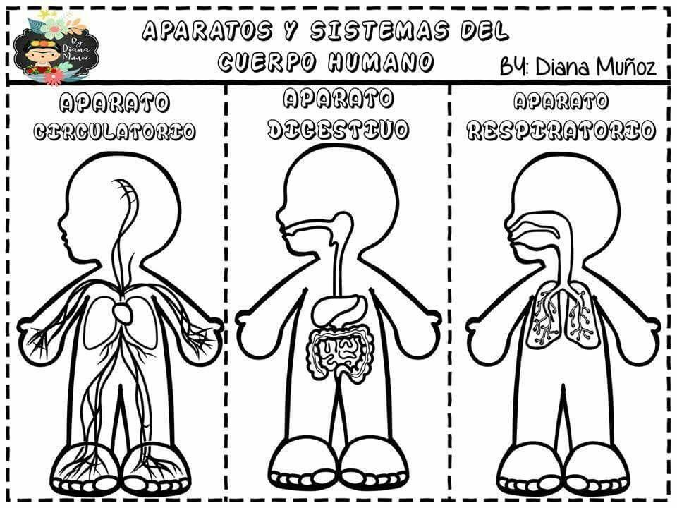 Sistemas Para Jardin Aparatos Del Cuerpo Humano Sistemas Del