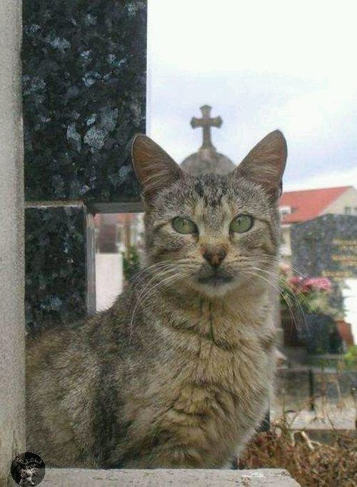 Topic des chats - Page 6 Ee0536df91873fd49fef8a7124b91986