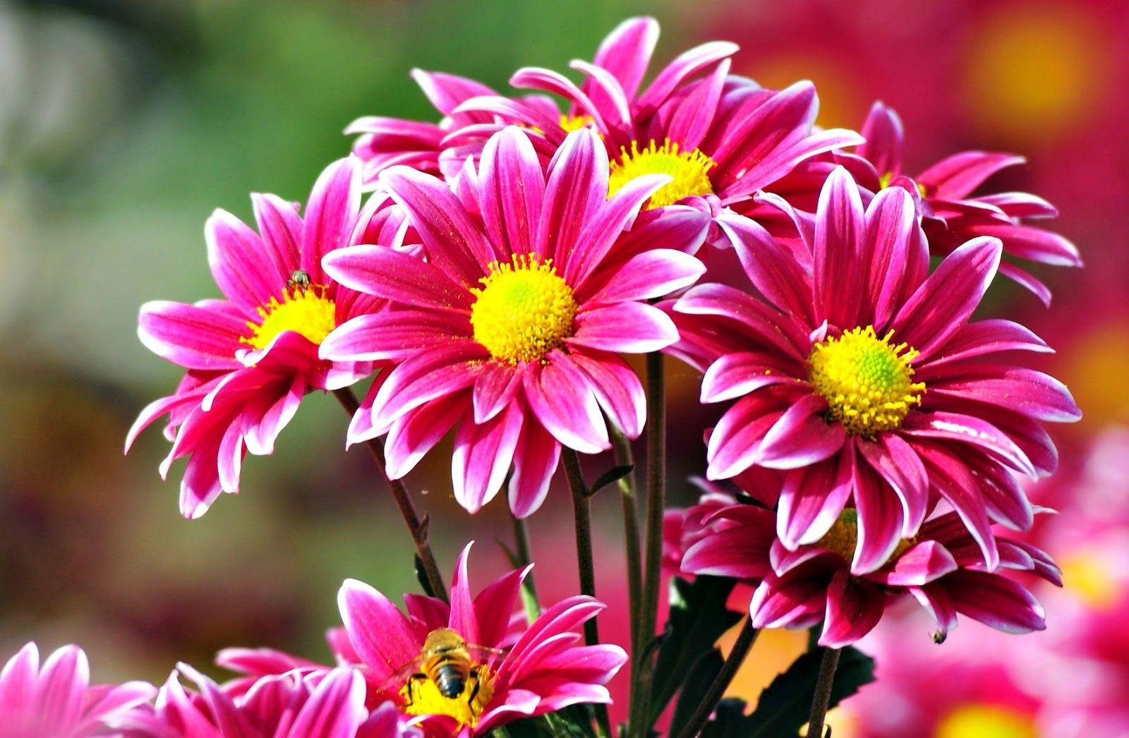 Gambar Wallpaper Bunga Cantik Indah Caption Ig Keren Kekinian