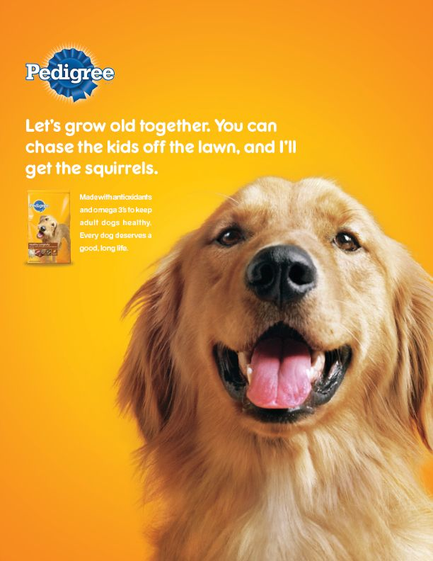 Pedigree Katie Brinkworth Copywriter Advertising I Didn T Do