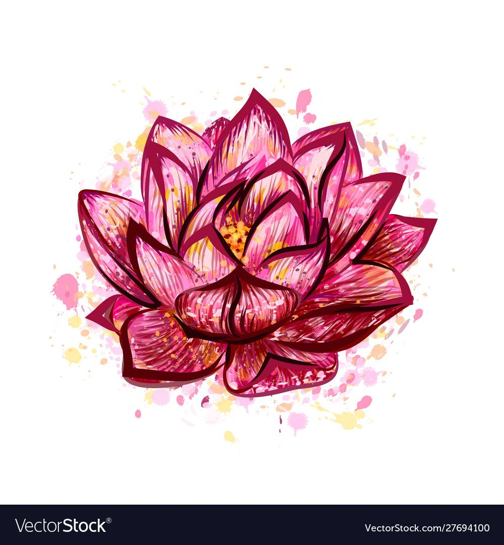 Lotus flower isolated on white hand drawn sketch vector