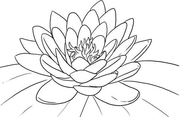 Lotus Flower Coloring Pages Free | Coloring Pages Trend | Copied to ...