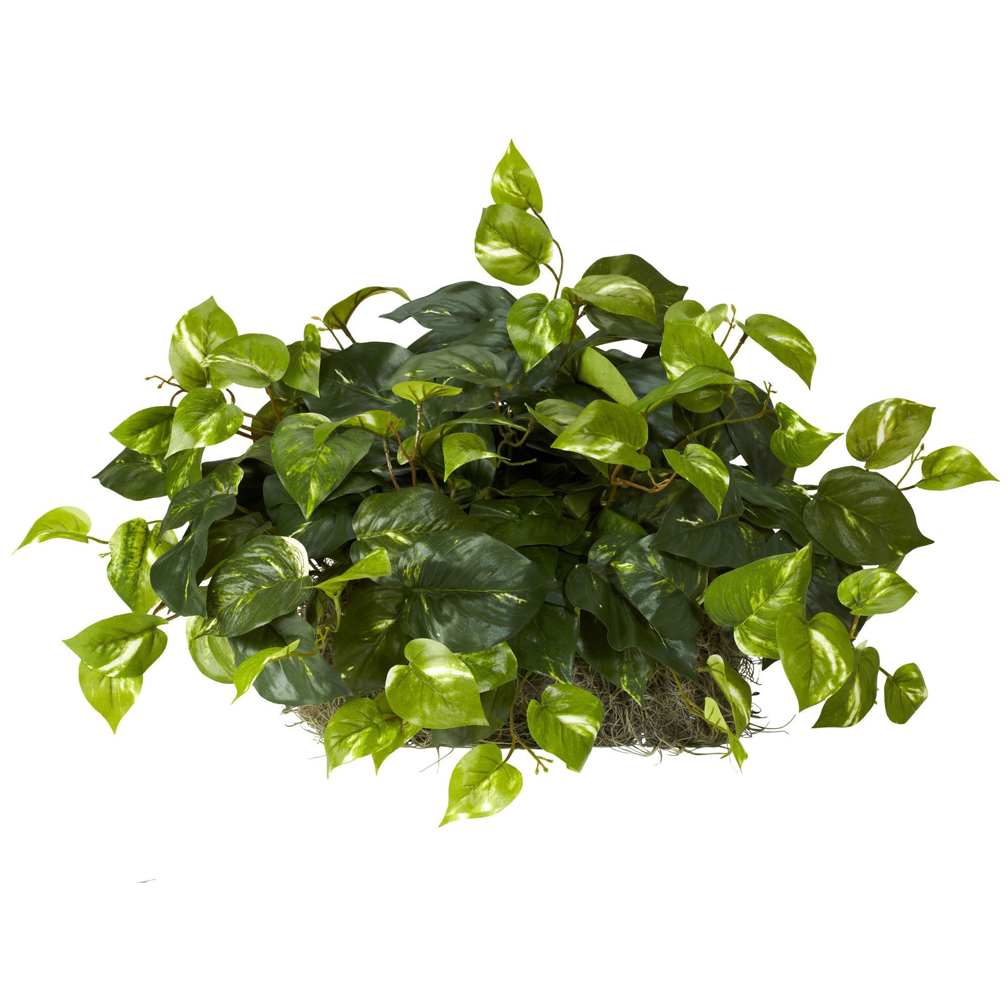 15 H Pothos Set On Foam Sheet  Faux Trees