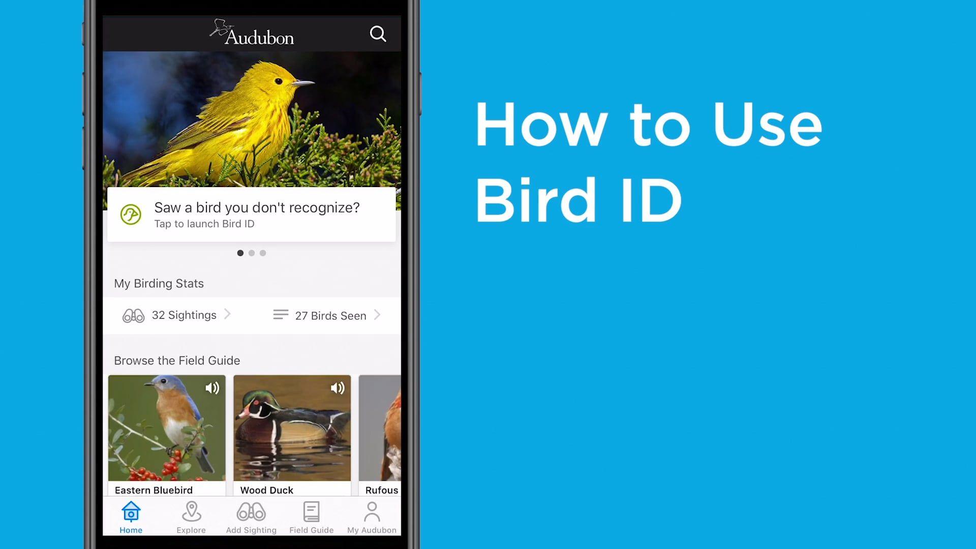 How to use the Audubon Bird Guide app in 2020 Bird