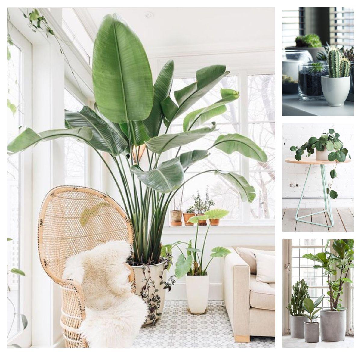 Rosliny Doniczkowe We Wnetrzach Moda Czy Koniecznosc Living Room Plants Tropical Living Room Interior Plants