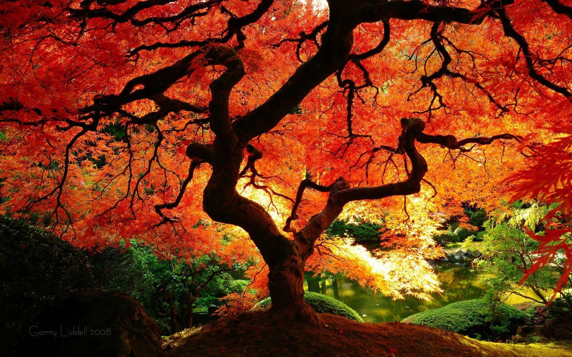 Beautiful Autumn Trees Background