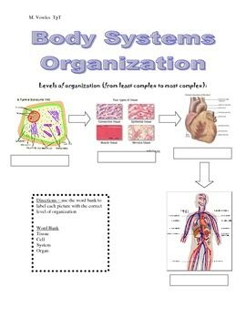 Levels Of Organization Cells Tissues Organs And Systems Science Cells Teacher Moments Biology Worksheet