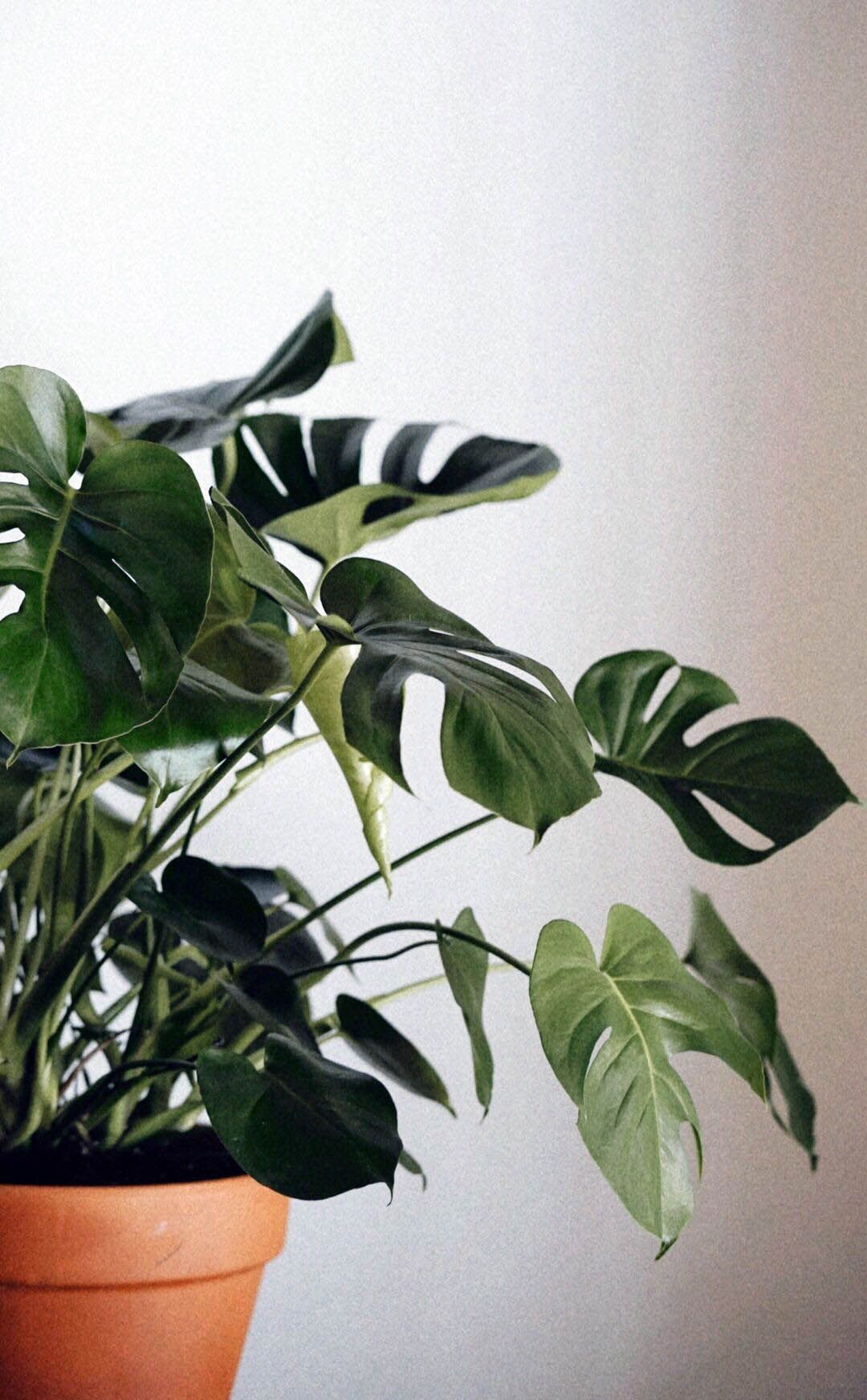 Nice Indoor Plants Near Me One And Only Neuronhome Com Plants Plant Aesthetic House Plants