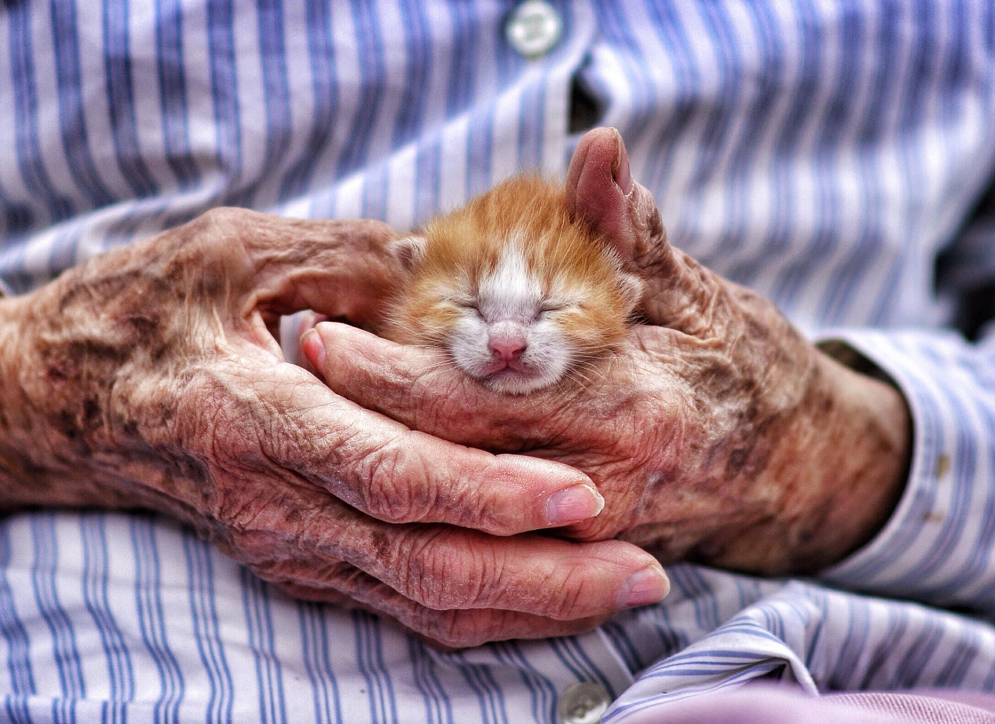 Mamaw holding a new baby kitten.