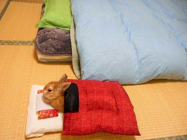 幫家裡的兔子買了個被窩 可愛的牠每晚都在等主人一起睡覺 - JUKSY 流行生活網