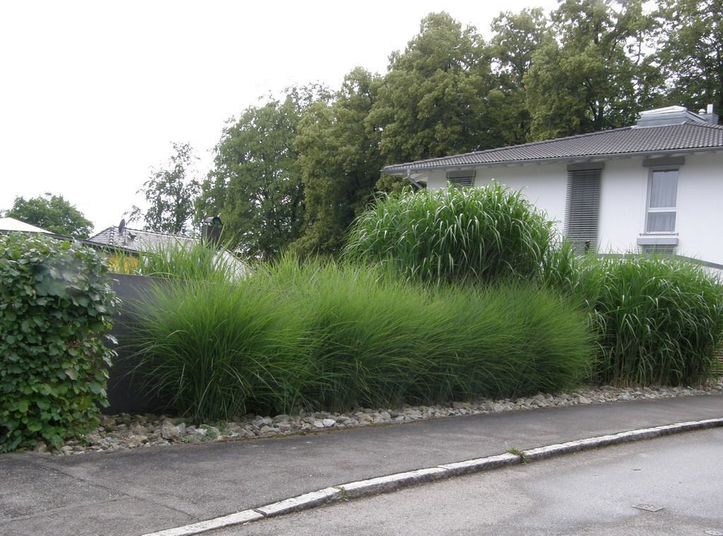 miscanthus sinensis 39 gracillimus 39 h gellandschaft pinterest grasses gardens and garden ideas. Black Bedroom Furniture Sets. Home Design Ideas