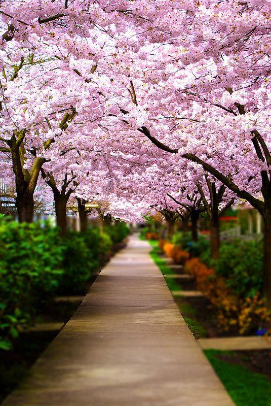 Dsc00091 Landscape Beautiful Places Nature