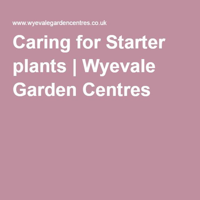 Caring for Starter plants | Wyevale Garden Centres