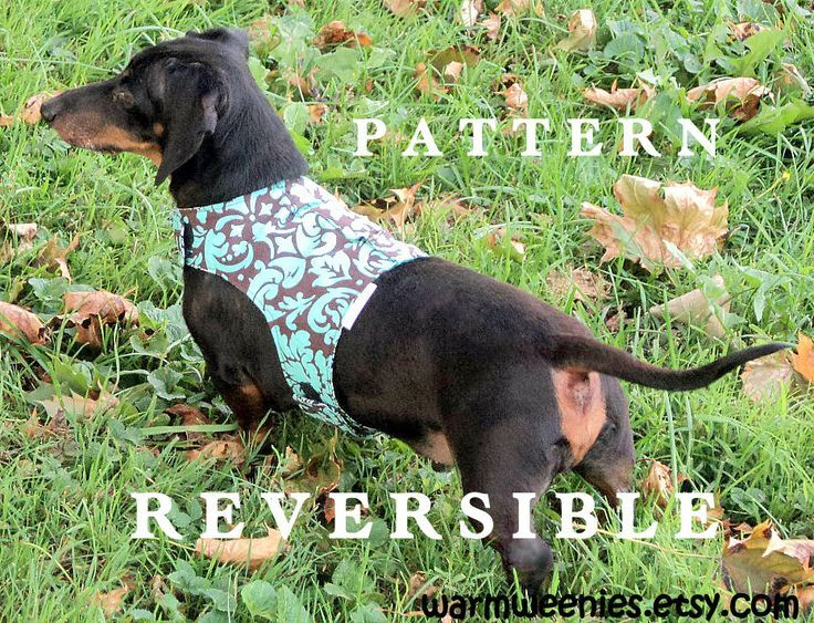 DIY small dog harness pattern by http://warmweenies.etsy.com   pets ...