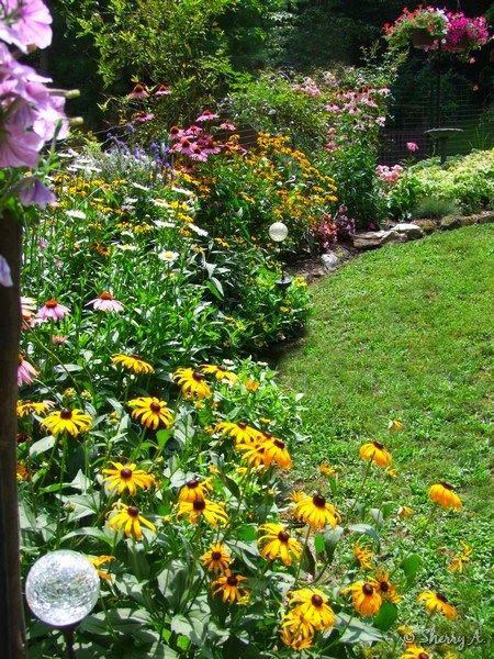 Full Sun Perennial Border Coneflower Shasta Daisy Rudebeckia