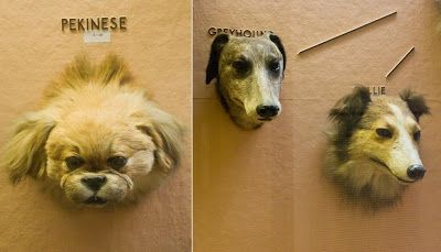 dogs' heads