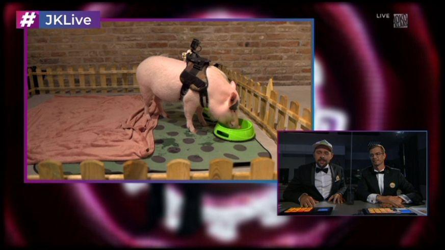 Joko Und Klaas Treiben Rtl Senderzoff Mit Schwein Paul Auf Die Spitze Joko Und Klaas Klaas Filme