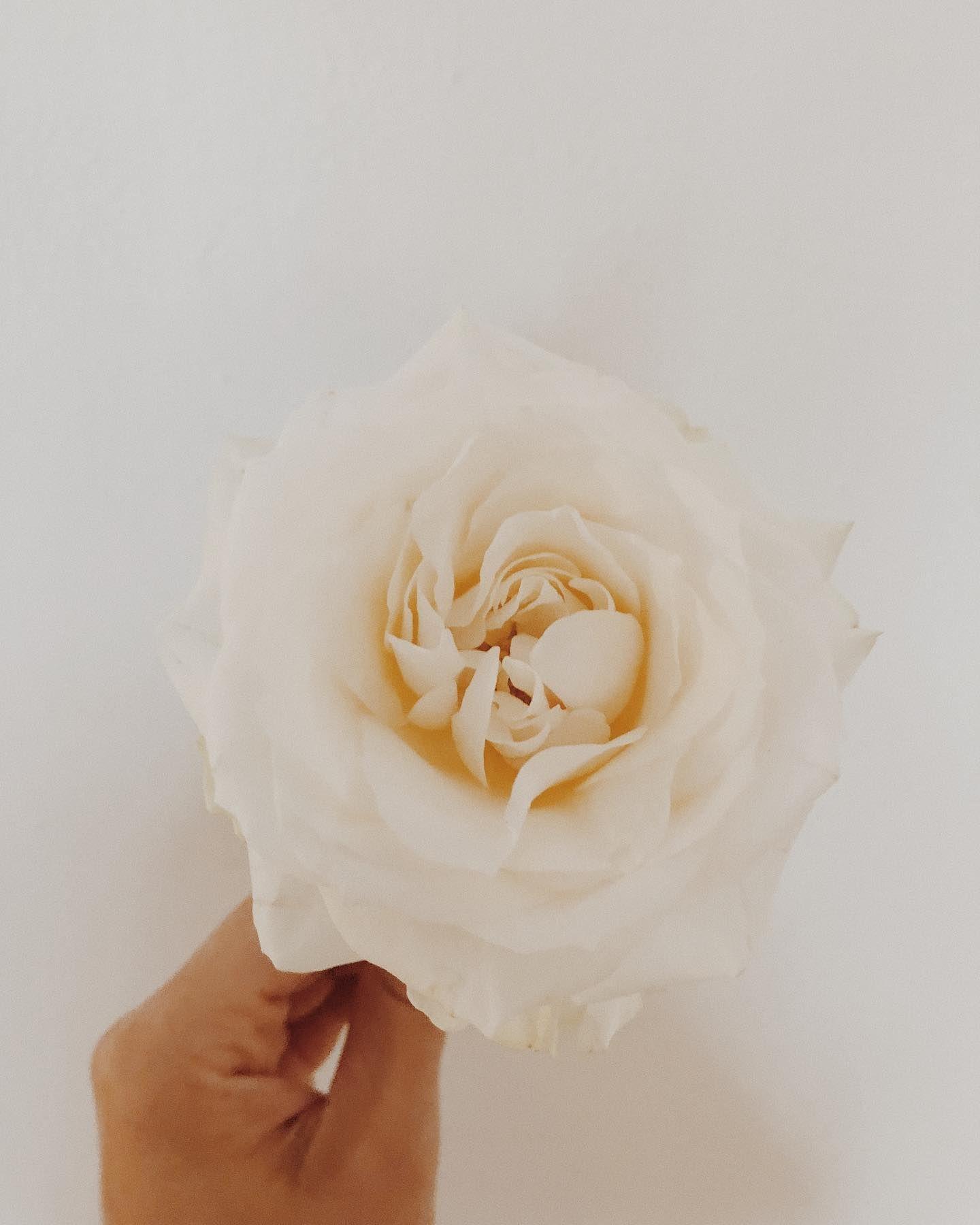 Simple Dzikibukiet Bukietslubny Bukiety Bukiet Kwiaty Slub Slubnaglowie Slubneinspiracje Weddinginspiratio Floral Studio Bouqet Floral Wedding