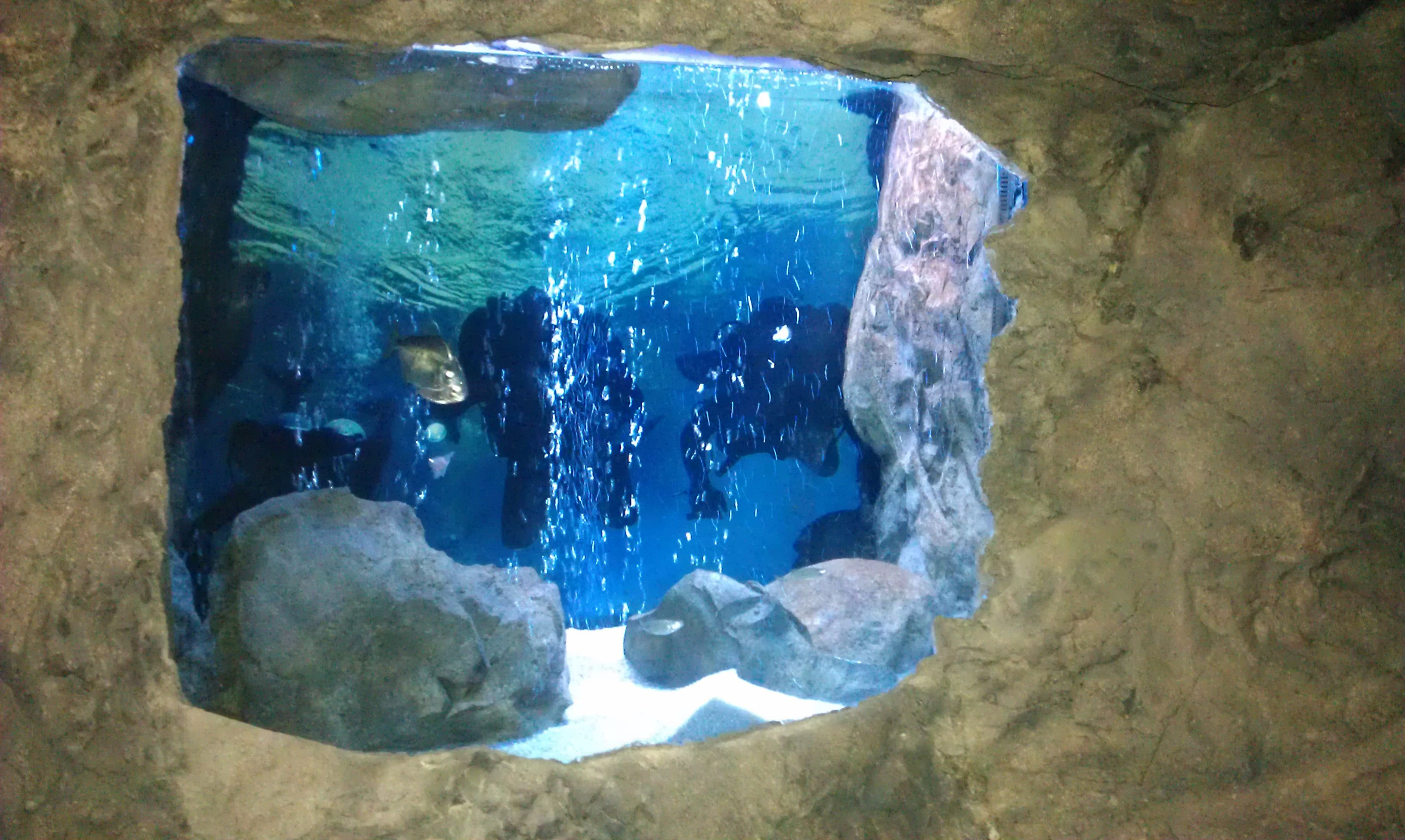 Universal Rocks Cave tank Update finally fish if you re in the