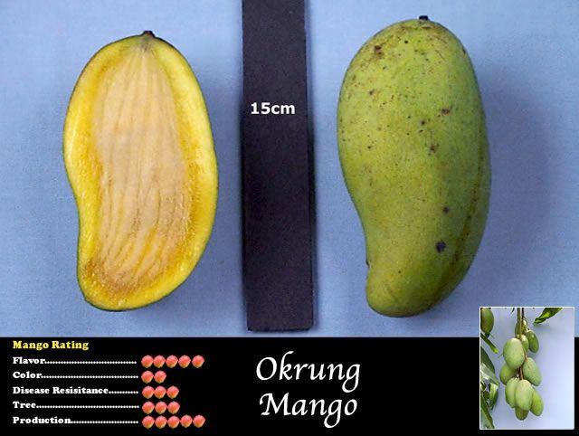 Okrung Photo By Ian Maguire Mango Pinterest Mango Varieties