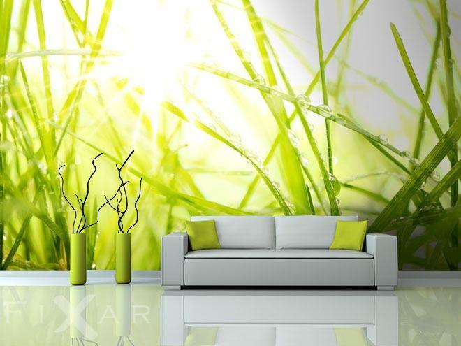 Gras im Sonnenschein | WALLPAPER | Pinterest | Fototapete und ...