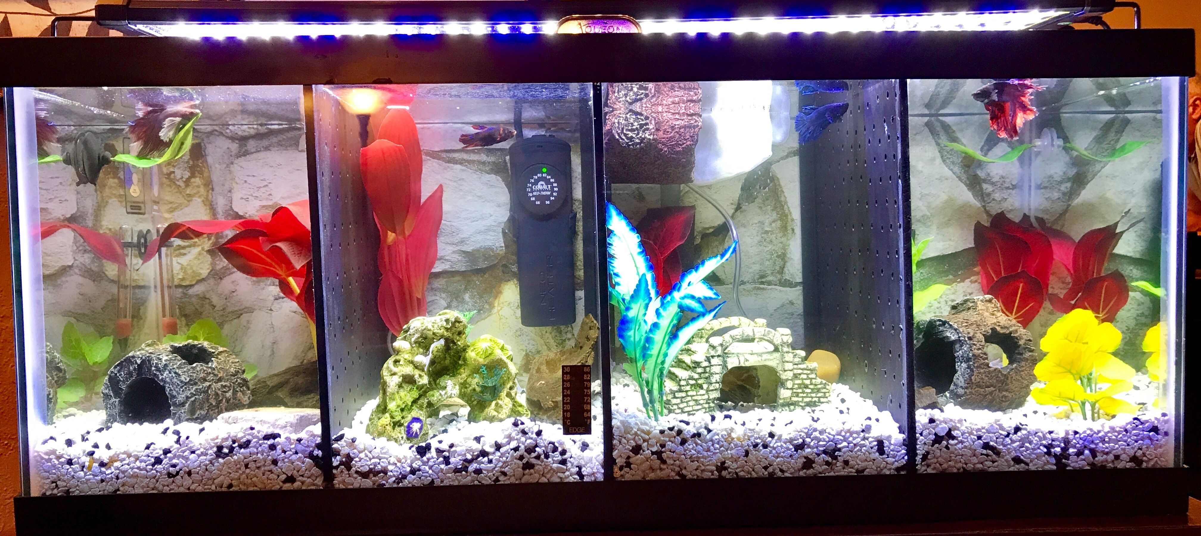 Divided Betta Tanks with an extra barrier and jump barrier as well