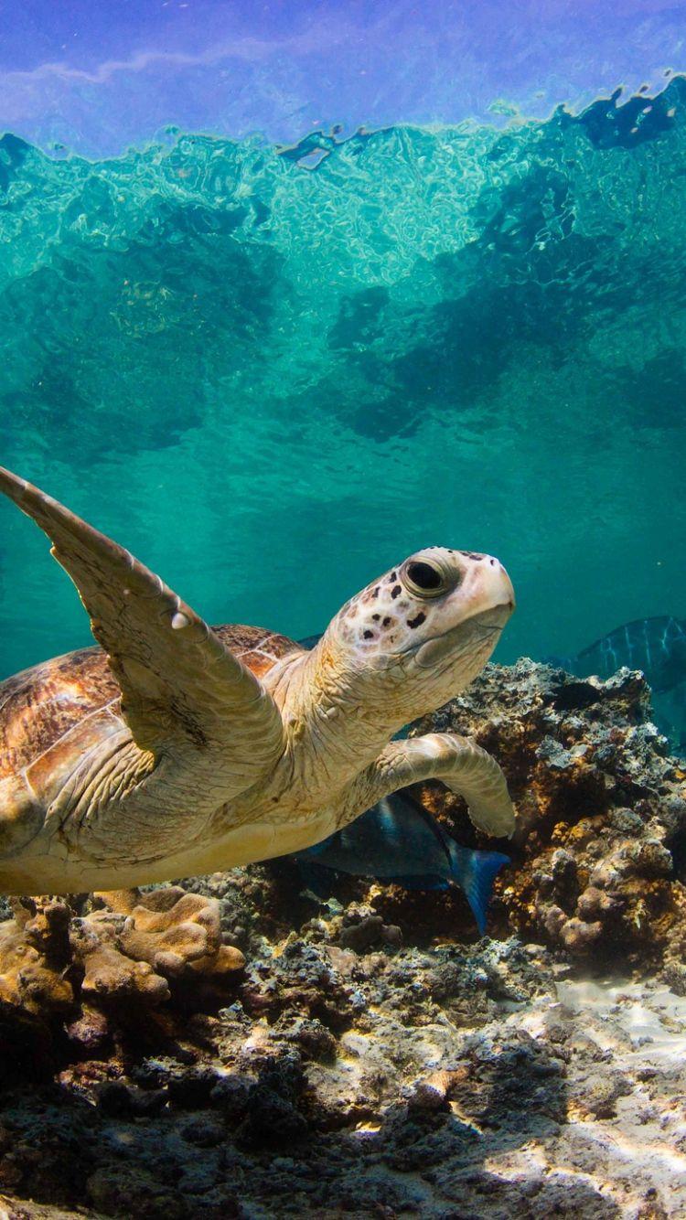 turtle_ocean_water_macro_fish_corals_73287_750x1334.jpg