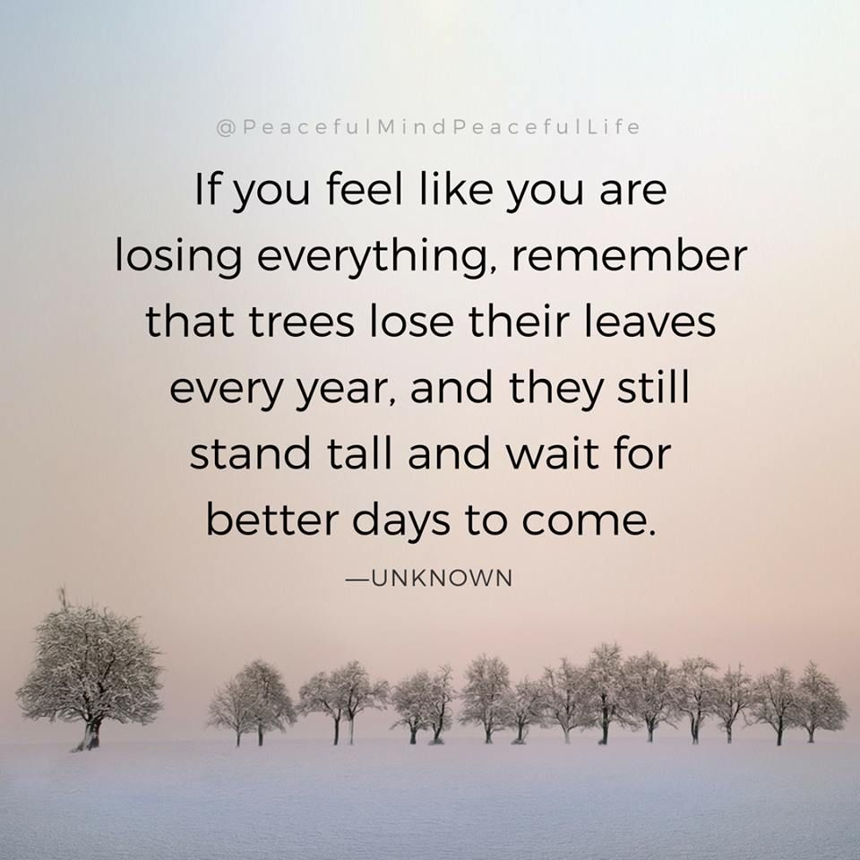 If You Feel Like You Are Losing Everything Remember That Trees