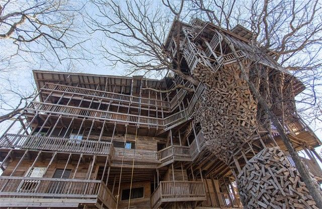 inside the worlds biggest tree house