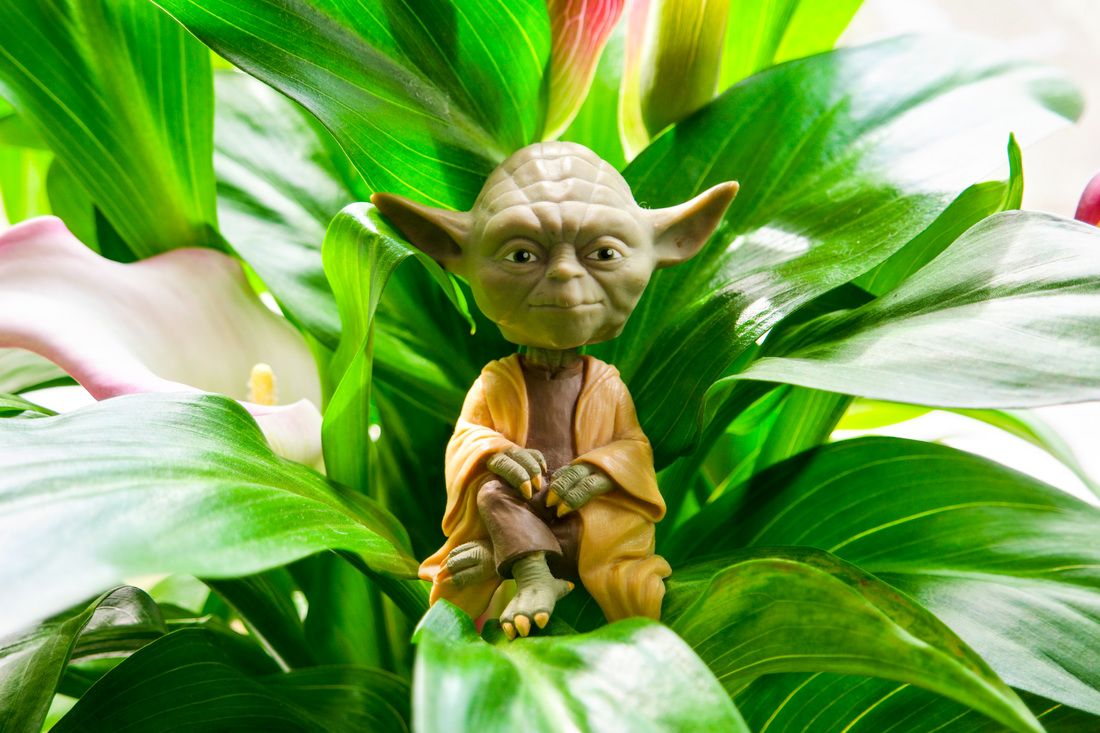 #Yoda #wallpaper #photography