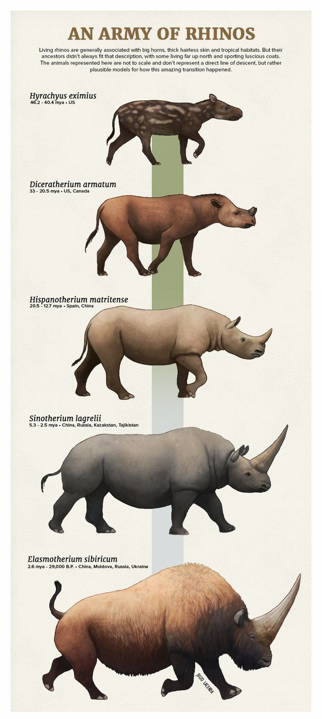 Extinct_AnimaIs· Diversity of extinct rhinos.(Credit